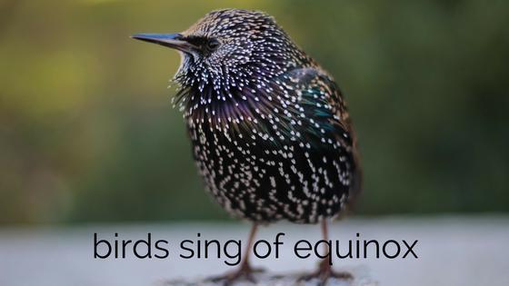 Ep 039 Equinox birdsong