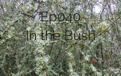 Ep 040 business in a bush