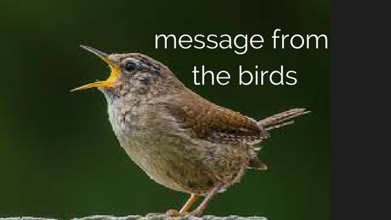 Ep038 Message from the Birds
