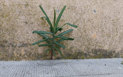Ep70: Concrete lifted by Tiny Plants!