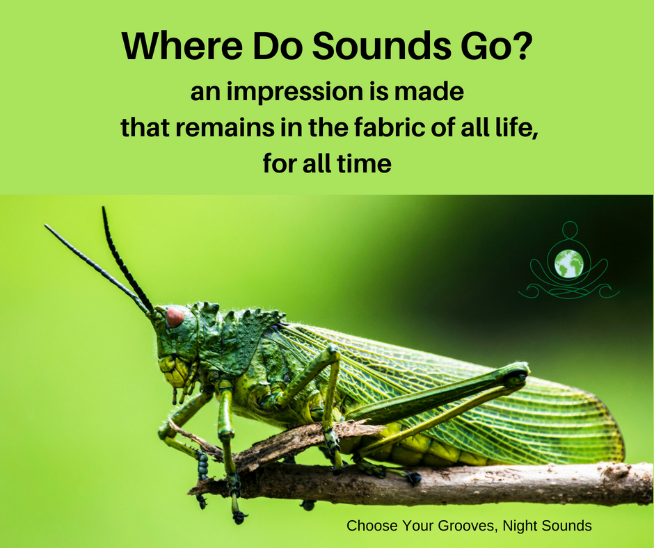 where do sounds go? choose your grooves