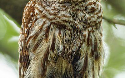 Ep 107 OWLS!