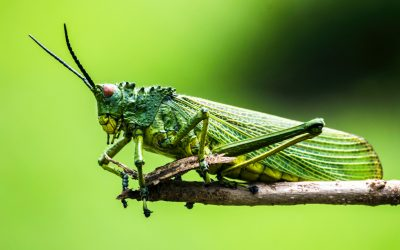 Ep 120 Grasshopper