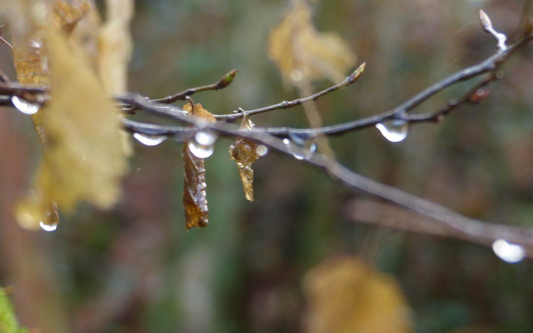 EP 145 Forest Rain