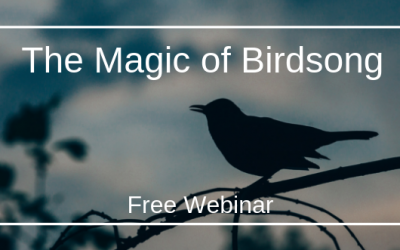 The Magic of Birdsong Webinar