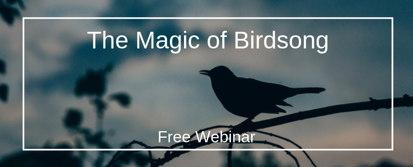 The Magic of Birdsong Webinar